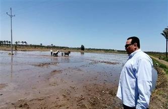 وكيل وزارة الزراعة بدمياط يتفقد الزراعات الصيفية