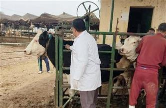 بيطري الشرقية: فحص 1549 رأس ماشية ضد البروسيلا والسل البقري| صور