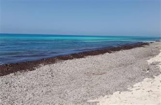 تعرف على رد البيئة على ما شاهده المواطنون بشواطئ الساحل الشمالي |صور