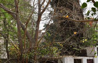 عواصف هوائية ساخنة تسقط أوراق الأشجار في الشوارع الرئيسية والحدائق العامة| صور