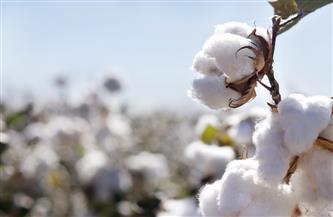 وكيل زراعة دمياط يتابع زراعات القطن ويوصي بزيادة معدلات الإنتاج