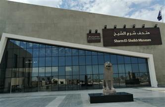 تمثال من عصر الدولة الوسطى.. قطعة شهر مايو بمتحف شرم الشيخ