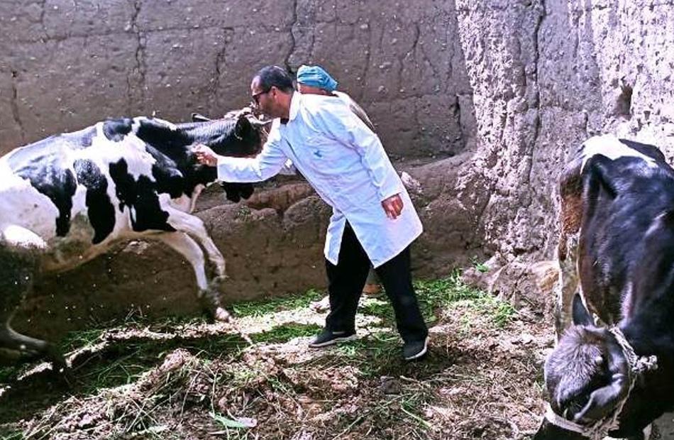 استمرار أعمال تحصين الثروة الحيوانية بالقليوبية لليوم الثالث على التوالي