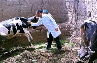 تحصين 285 رأس ماشية فى المحمودية بالبحيرة