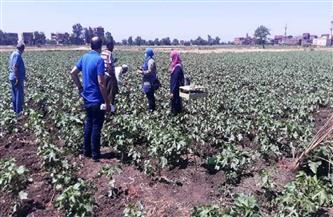 ندوات إرشادية للمزارعين بالزقازيق ومنيا القمح للنهوض بزراعة القطن بالشرقية  صور