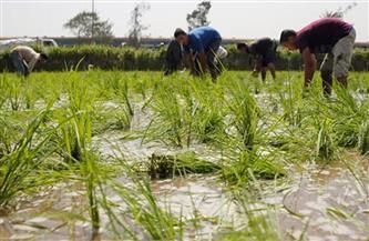 «ري القليوبية»: لا تهاون في تنفيذ قرار منع زراعة الأرز.. وغرامات كبيرة على المخالفين