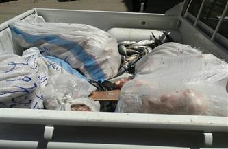 ضبط 250 كجم لحوم وأسماك ودواجن فاسدة داخل مطاعم في الفيوم| صور