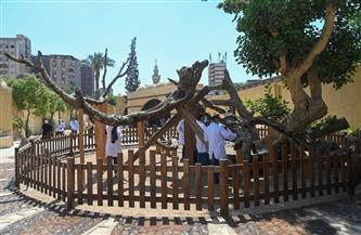 نائب محافظ القاهرة: تطوير مزار شجرة مريم في المطرية يسير وفق جدول زمني محدد
