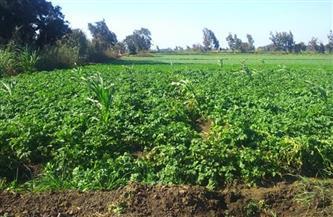 زراعة المنوفية: 4151 محضرا لتقسيم الأراضي بالمحافظة منذ يناير الماضي
