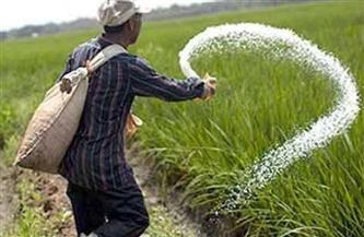 زراعة القليوبية: صرف الأسمدة للمزارعين استعدادا لموسم زراعة المحاصيل الصيفية