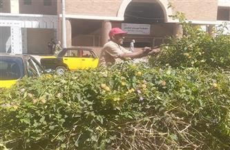 رفع كفاءة وتجميل الحدائق والمسطحات الخضراء شرق الإسكندرية| صور