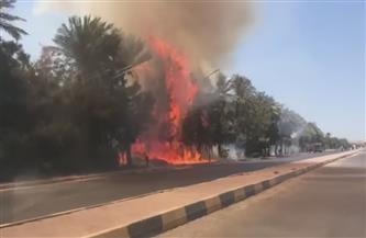 حريق هائل في الغابة الشجرية بالغردقة.. وإيقاف حركة السيارات لحين السيطرة على النيران  صور