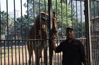 حديقة الحيوانات بدون زائرين في شم النسيم | صور