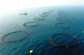 تنفيذ 21 مشروعًا في البحرين الأحمر والمتوسط.. الأقفاص السمكية دائرة الاكتفاء الذاتي