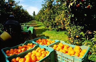 «الزراعة» تصدر نشرة بالتوصيات الفنية لمزارعي الموالح يجب مراعاتها خلال يونيو