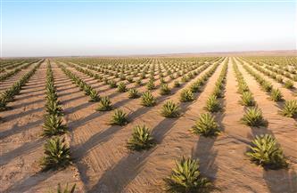 """جهاز الاستثمار العُماني يتولى زراعة """"المليون نخلة"""" في السلطنة"""