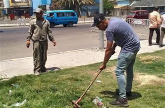 تجميل وزراعة المسطحات الخضراء بمحور المحمودية بالإسكندرية | صور