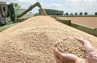 صوامع الإسكندرية تستقبل 47 ألف طن قمح منذ بدء موسم الحصاد