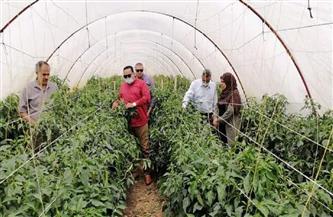 نجاح زراعة الفلفل داخل الصوب بنظام الري بالتنقيط بمحافظة دمياط| صور