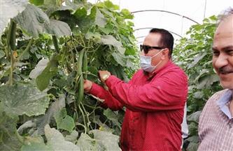 نجاح زراعة الخيار داخل الصوب بنظام الري بالتنقيط بمحافظة دمياط| صور