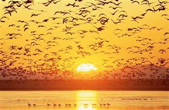 مصر تشارك العالم الاحتفال باليوم العالمي للطيور المهاجرة على منصات التواصل الاجتماعي