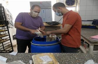 ضبط وإعدام 280 كيلو أغذية غير صالحة للاستهلاك الآدمي فى حملة لمديرية الصحة بالمنوفية