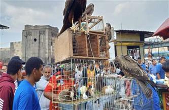 ضبط زواحف وطيور خطرة غير مصرح ببيعها في السيدة عائشة