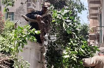 الإسكندرية تواصل حملات تجميل الحدائق والمسطحات الخضراء وسط المدينة | صور