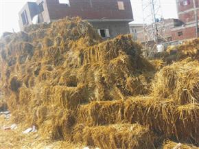 وزيرة البيئة : الدولة نجحت في القضاء على أزمة قش الأرز خلال آخر عامين