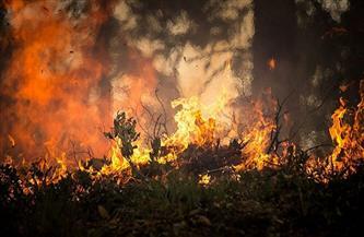 الآلاف من رجال الإطفاء يسعون لإخماد حرائق غابات في روسيا