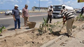 زراعة 410 من الأشجار المختلفة بالجزيرة الوسطى بكورنيش كليوباترا شرق الإسكندرية  صور