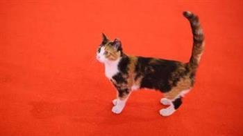 رئيس الأوبرا: التخلص من القطط مسئولية الطب البيطري