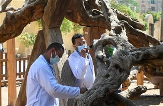 أبرز عمليات التطوير والترميم بموقع شجرة مريم بالمطرية إحدى محطات رحلة العائلة المقدسة