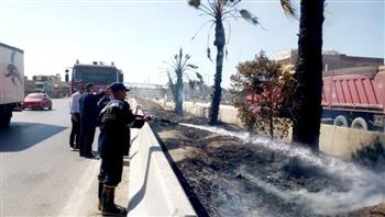 السيطرة على حريق بأشجار في الطريق الصحراوي بالإسكندرية | صور