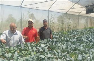 الإرشاد الزراعي ينظم ندوات ولقاءات توعية لمزارعي المنيا والإسكندرية| صور