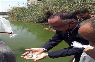 إلقاء 2 مليون وحدة زريعة بلطي نيلي بالبحر الفرعوني بمحافظة المنوفية