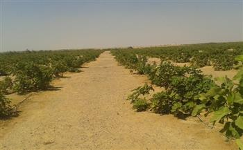 زيادة الإنتاج الزراعي بالأسعار الجارية إلى 1.11 تريليون جنيه خلال 2021-2022