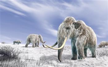 """أيقونة """"العصر الجليدي"""" تستعد للعودة.. مشروع علمي لإعادة استنساخ الماموث المنقرض"""