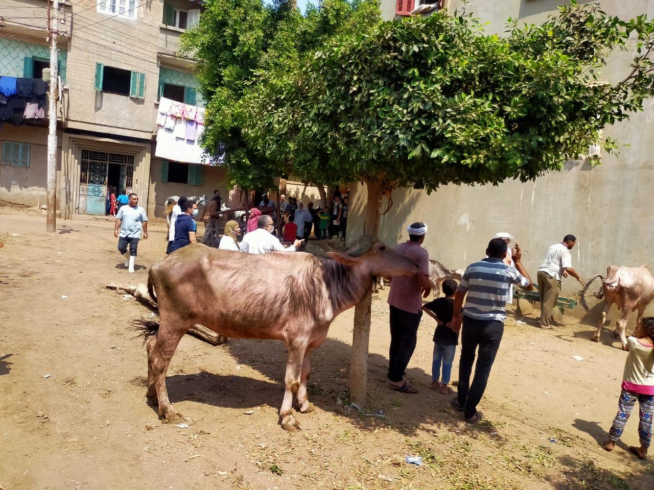 قافلة بيطرية فى قرية   حنون  بالغربية