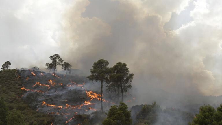 الجزائر ضبط  مشتبها بتورطهم في حرائق الغابات