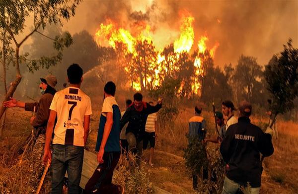 حبس  شخصا تسببوا في حرائق الغابات بالجزائر