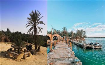 مناسبة للتوسع بزراعات النخيل والزيتون.. سيوة منطقة تراث عالمية صالحة لتكون قاطرة الزراعة المصرية