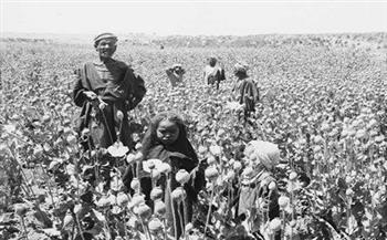 """من واقع تقارير حكمدار القاهرة في الثلاثينيات.. كيف حافظت """"عصابة المقطم"""" على أسرار تجارة الكيف؟"""