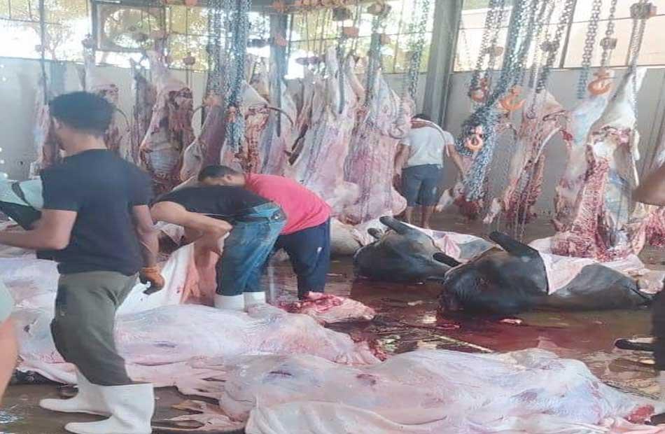لمحاربة غلاء الأسعار  فتح منفذ لبيع اللحوم الحمراء بسعر الكيلو  جنيه بطهطا غدًا