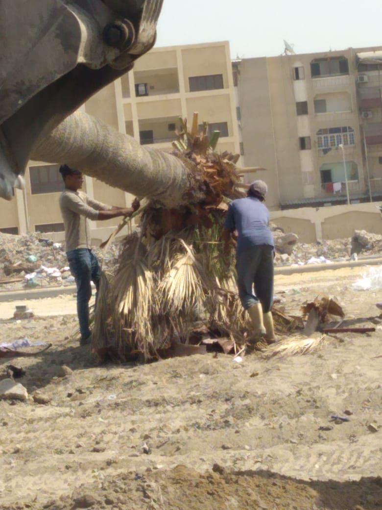 زراعة عدد من أشجار النخيل