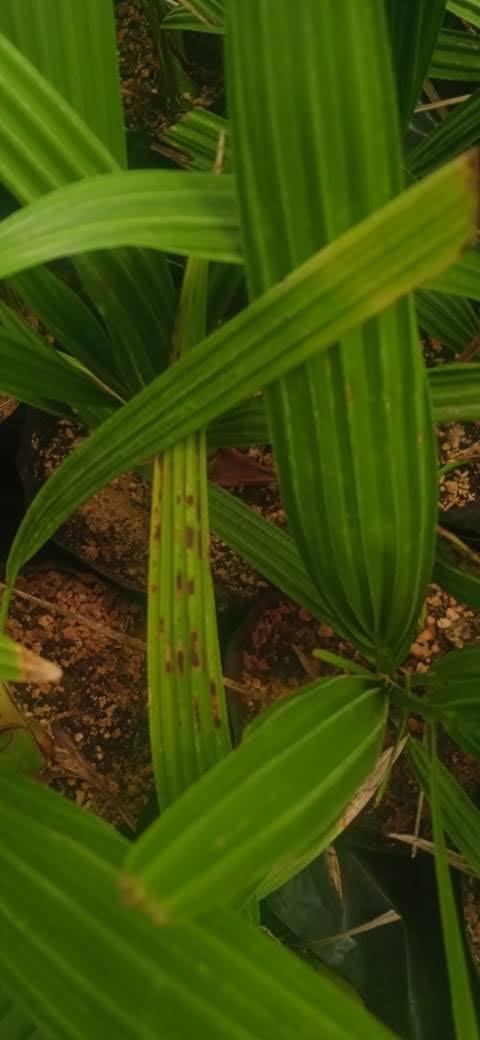 بحوث أمراض النباتات يرصد نشاطه