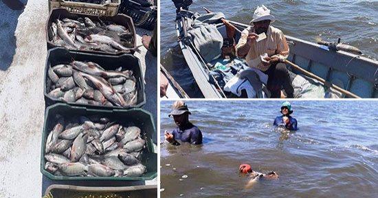 الثروة السمكية إنتاج المصايد الطبيعية ارتفع لـ  ألف طن وإنتاج بحيرة المنزلة  ألف طن