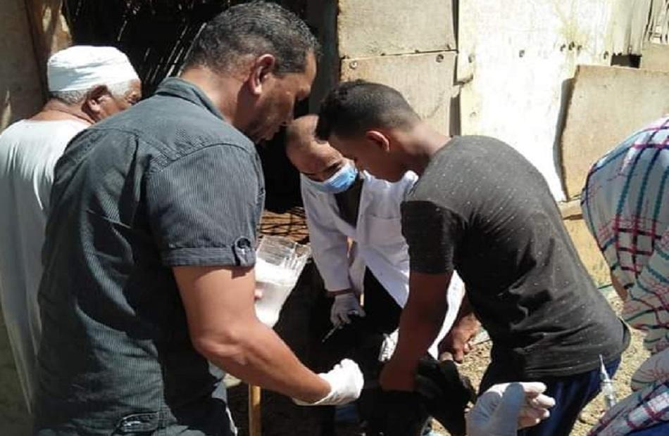 حملة بيطرية لتحصين الحيوانات ضد طاعون المجترات بمدينة القصير   صور
