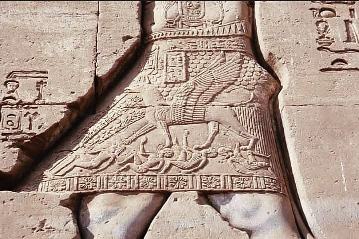 استخدمه المصري القديم في الصيد.. الكلب السلوقي
