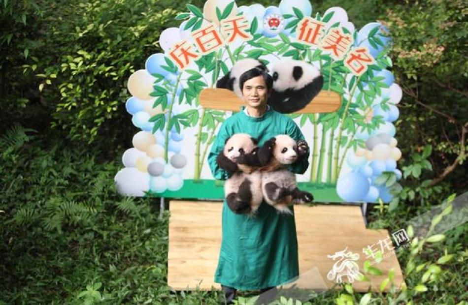 حديقة حيوانات صينية تدعو الجمهور إلى اقتراح أسماء لتوأم باندا  صور